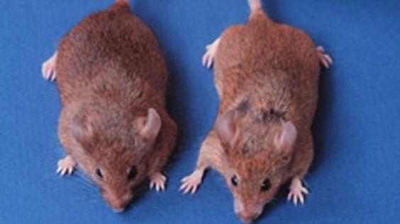 032518 mice