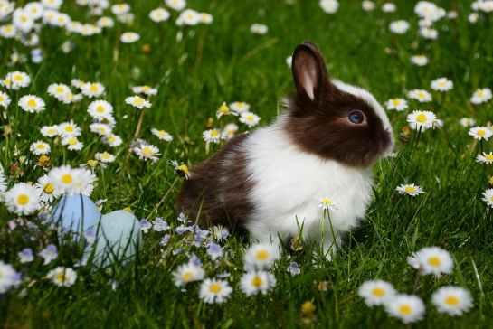 041518 rabbit