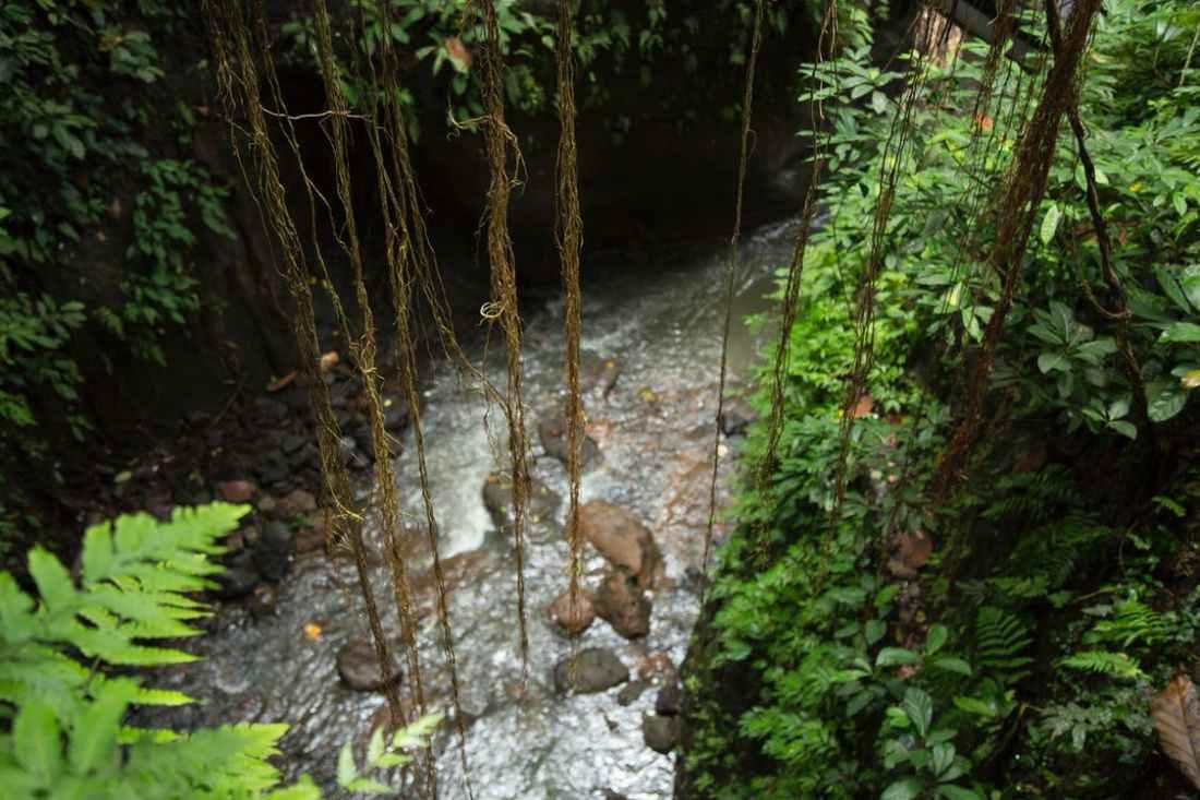 052718 rain forest