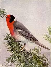 122318 red face warbler