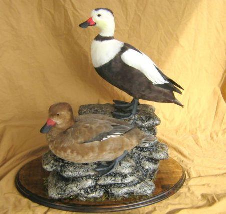 022419 soecimen lab duck