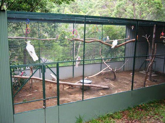 031719 large aviary