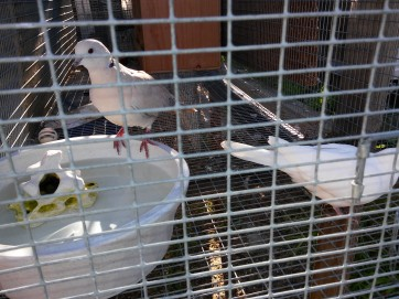 doves im just getting a drink