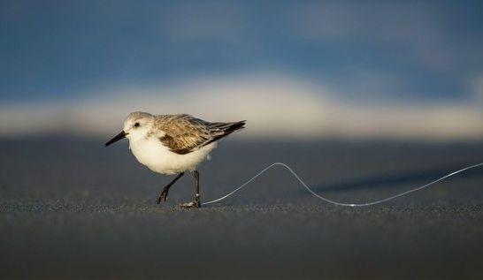 092919 bird and fishing line