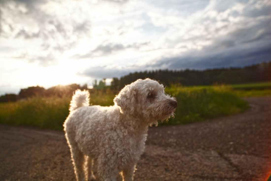 100619 hunting dog