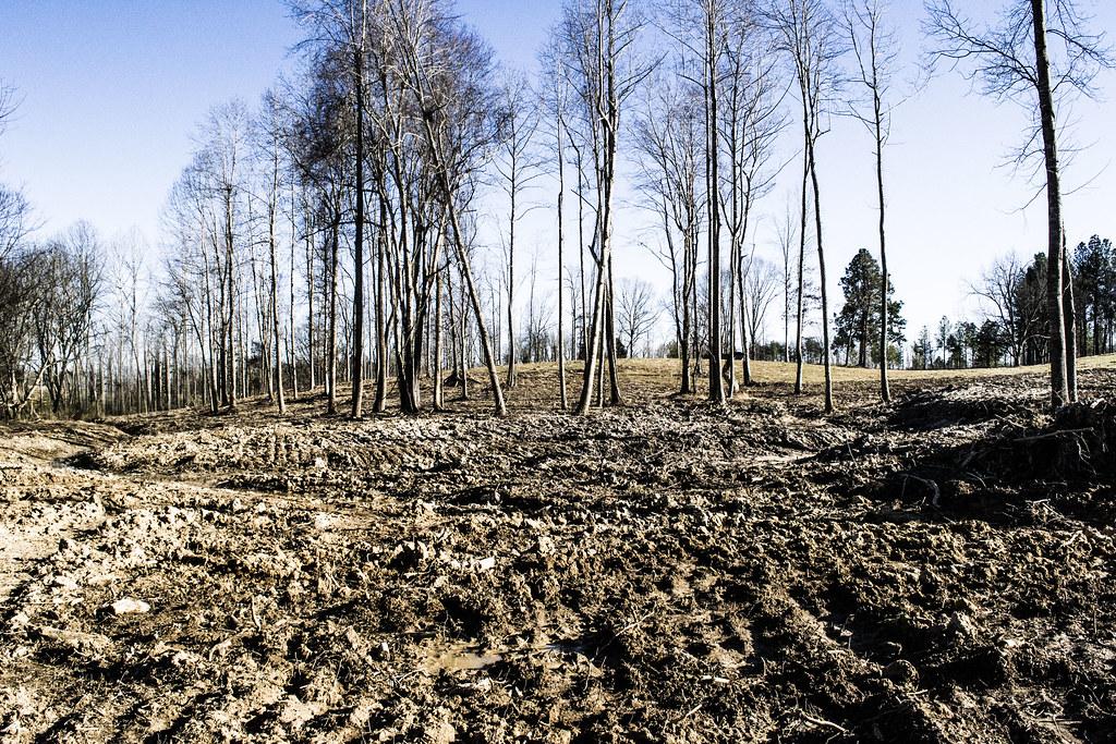 100619 trees laid waste